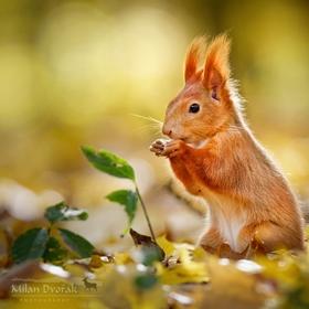 ...podzimní svačinka...
