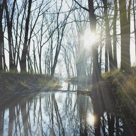 probouzející se příroda