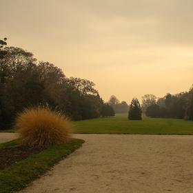 Svítání v parku