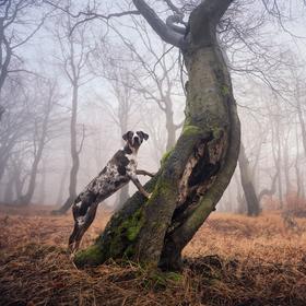 S leopardem v lese