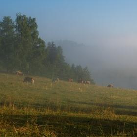 Pastva za mlhy