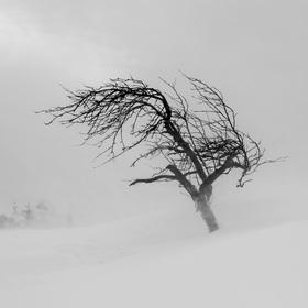 Ve větru a sněhu