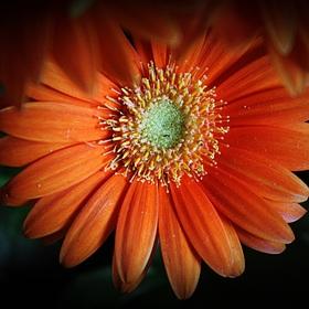 Orange... V.