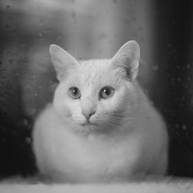 Kočka v okne