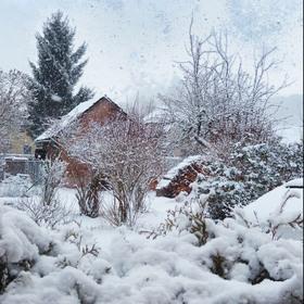 Sníh u nás
