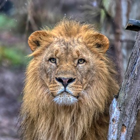 lev - Zoo Lešná