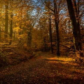Podzimní melancholie .....