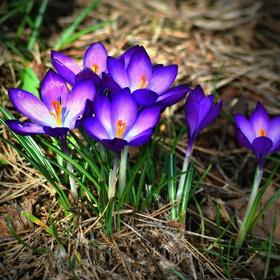 První poslové jara