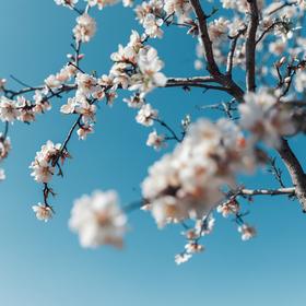 Jar v plnom prúde