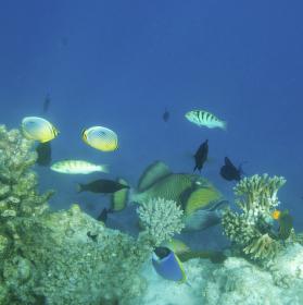 Podvodní Maledivy