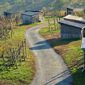 cesta mezi vinohrady