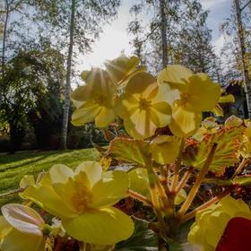 Parkové květy