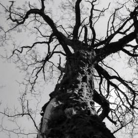 Strašidelné stromy