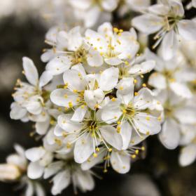 Kvetoucí keř