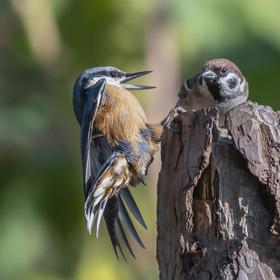 Vypadni vrabče.