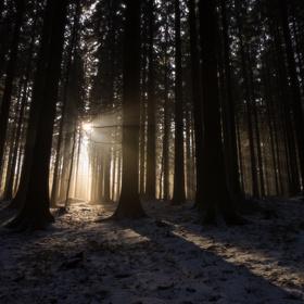 jít za světlem