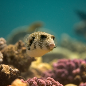 Setkání na korálovém útesu