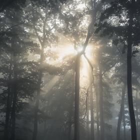 Skrz stromy