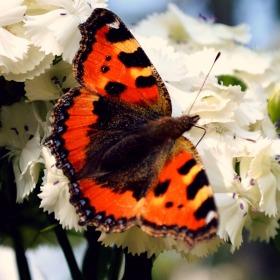 butterfly.. :)