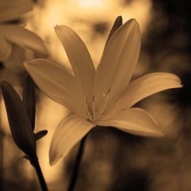 Květinový podvečer