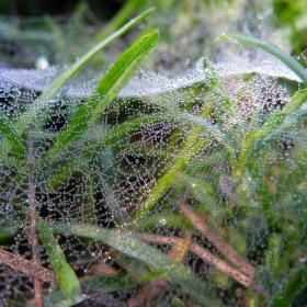 Pavoučí perly