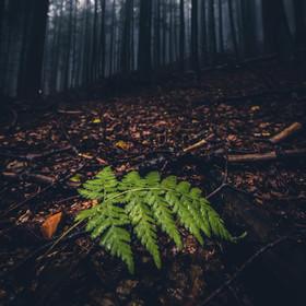 Za deště v podvečerním podzimním lese