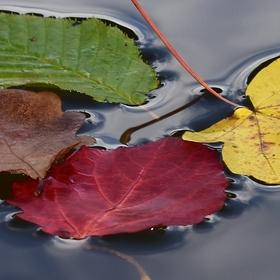 """Podzimní """"zátiší""""."""