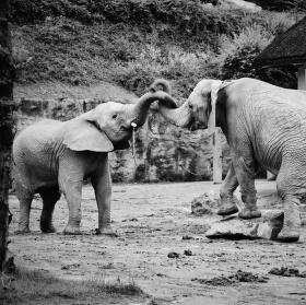 """"""" Sloni v objetí """""""