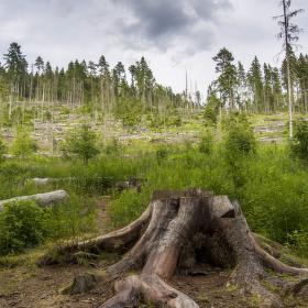 Nemocný les