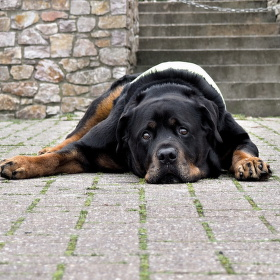 Pozor zlý pes:-)