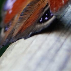 Motýlí líheň