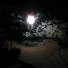 Měsíček v borovém háji.