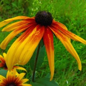 krasny kvet