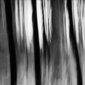 Forrest (tož les)