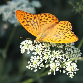postoj chvíle motýlí