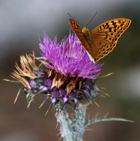 Motýl na kvete