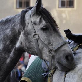 kůň II