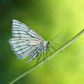 Jsem jen motýl.....