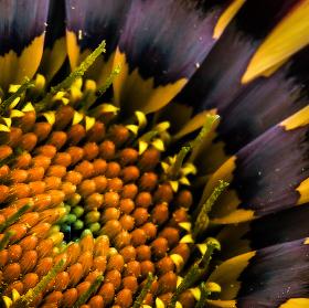Barevná flora