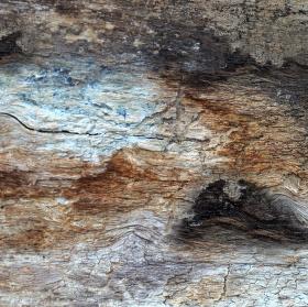 Bouře aneb jakou barvu má ztrouchnivělé dřevo