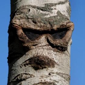 Dřevěný bohatýr