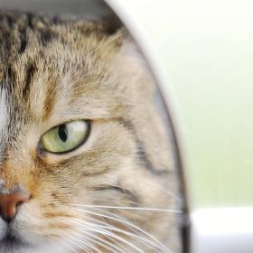 Kočka a zrcadlo