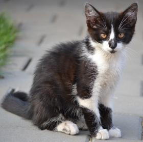 Kočičí model