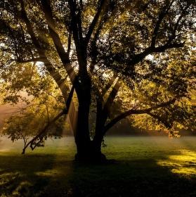 Ráno v Průhonickém parku
