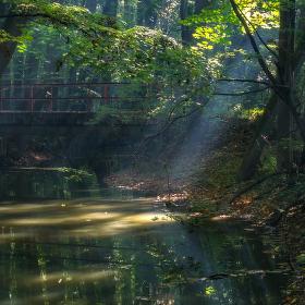 Lužní les X - Přírodní rezervace Polanský les