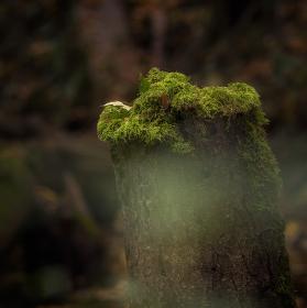 Lužní les XII - Přírodní rezervace Polanský les