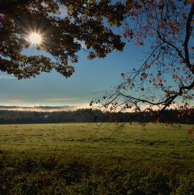 Ráno v Křivoklátských lesích...