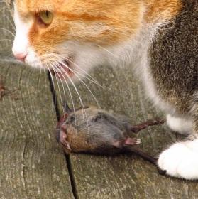 Kočka s úlovkem