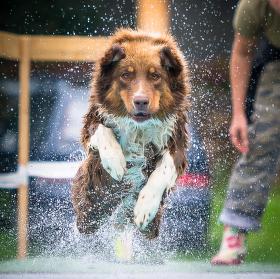 Waterdog contest
