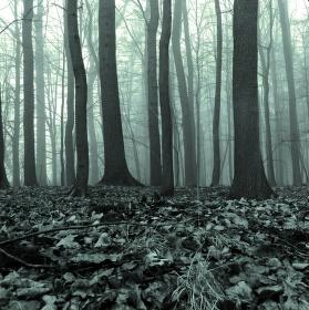 smutek v lese